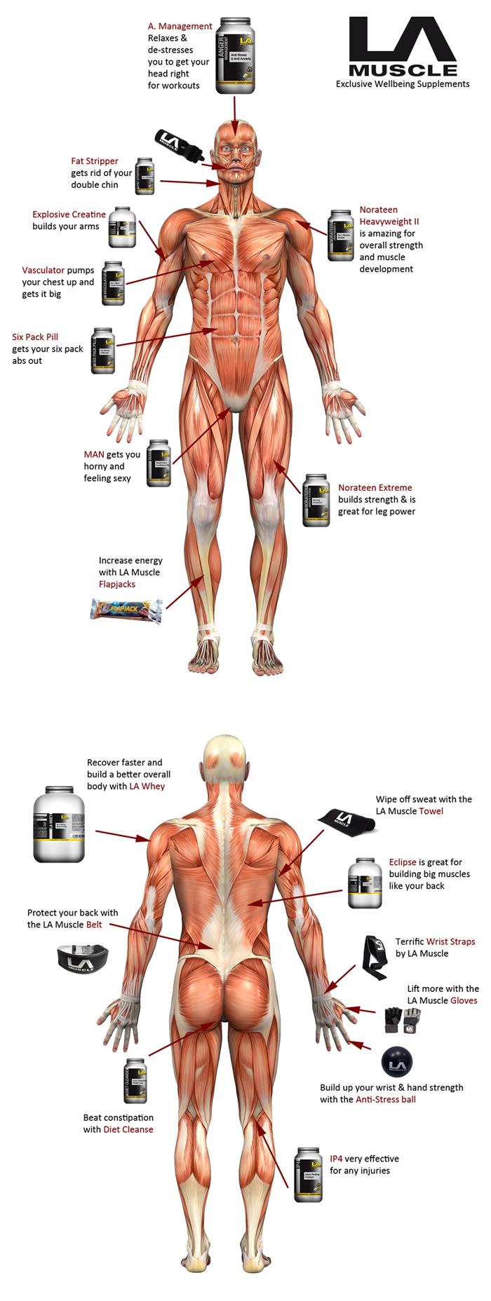 Anatomy Chart by LA Muscle